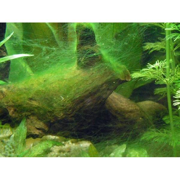 Aquatic Nature ALG CONTROL F Verwijderd draad en penseelalg