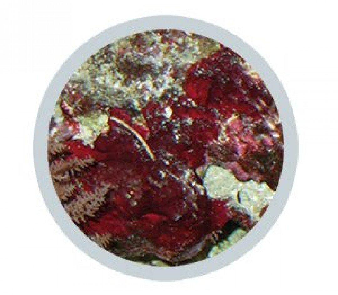 Excital verdringt rode smeeralgen (Cyano sp.)