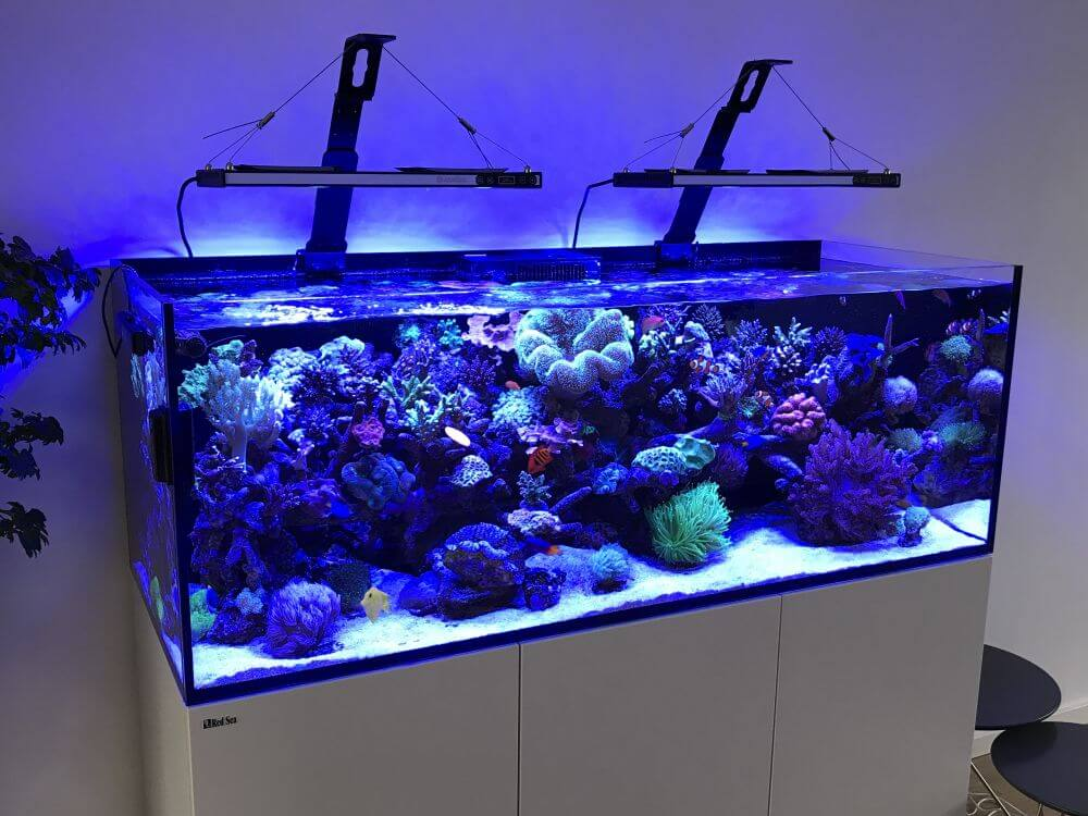 nano zeeaquarium led verlichting archidev view images asaqua max led asmax asaqua smart cree led