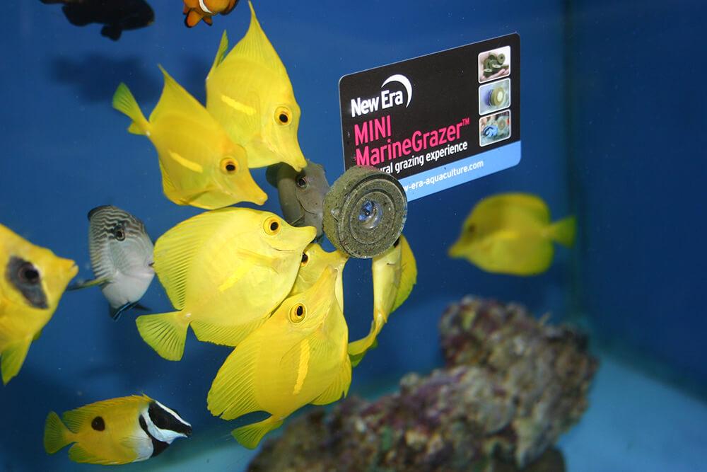vitalis marinegrazer mini
