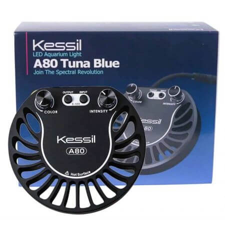 Kessil LED A80 Tuna Blue