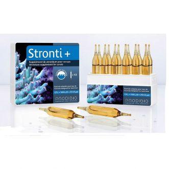 Prodibo STRONTI + 6 Amp.