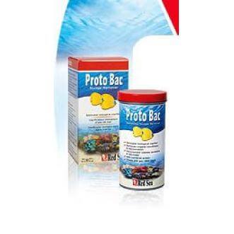 Red Sea Proto bac